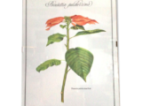 Cadre botanique